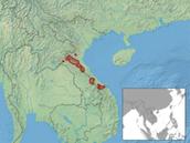Distribution of Saola population