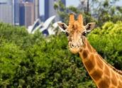 10. Taronga Zoo