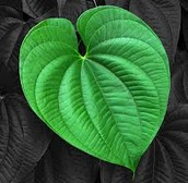Plant growth ???