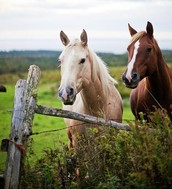 What is a Equine Vet?