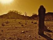 Desert        Desierto