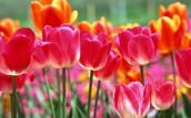 Spring Meeting Dates