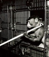 No More Prison For Monkeys!