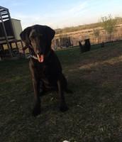 Mi Primer Perro