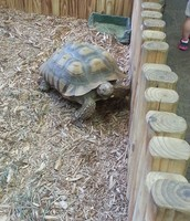 Turtle Sighting at Catawba Science Center!