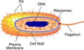 Nucleus Structure