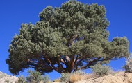 State Tree-