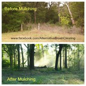 Alternative Brush Clearing, LLC. is a full service land clearing company