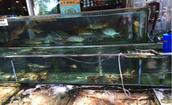 Sampan Seafood/Dim Sum Resturaunt