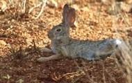 A rabbit enjoying the hot summer
