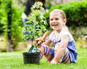 Jackie esta plantando los arbol