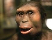 Femella d'Homo erectus