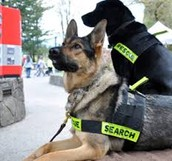 Working dogs can act as drug detectors