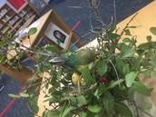 1st Grade Habitat Project