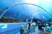 Inside Look at Georgia Aquarium