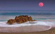 The orange-blossom moon [15]