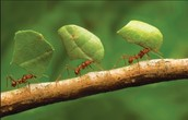 Ants are hard workers