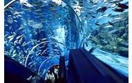 Underwater Sea World