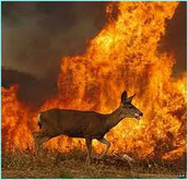 Animals in wildfires