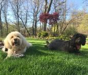 Luna and Ebony, East Islip, NY