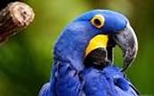 Fudges bird