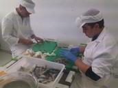 Industria transformadora de pescado