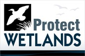 KEEP THIS FROM HAPPENING!! PROTECT OUR WETLANDS!!
