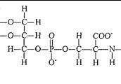 Lipids (Polymer)