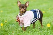 Clicker Dog Trainer