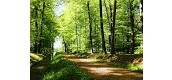 Payet Forest