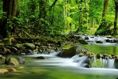 What equipment did you need at the Daintree rainforest?