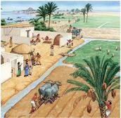Agriculture Advances