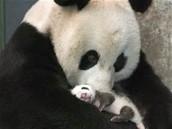 Random things about pandas.