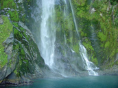 Rain Forest landsape