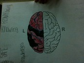brain hemisphere left brain