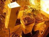 Columbia police discover marijuana