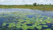 Have You Heard Of The Everglades?