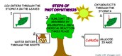 Steps and processes of photosynthesis