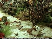 Marine Invertebrate Life