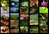 Facts about the rain-forest