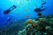 Scuba Diving (Australia)