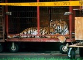 How are animals treated in circuses