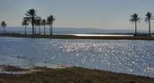 Lake Habbaniyah