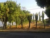 Áreas verdes, utilizadas de basurero