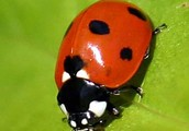 All About Lady Bugs
