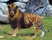 Fascinating animal found in Friend, NE.