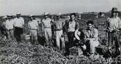 Historical Evidence #1 Bracero Program (1942-1964)