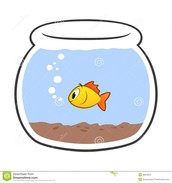 How we should treat our fish