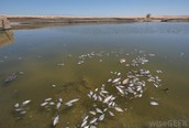 acid rain damage fish