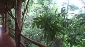 El bosque de Iguazú